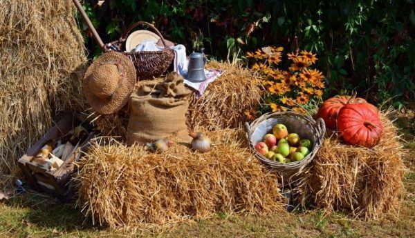 harvest feast thanksgiving in madrid