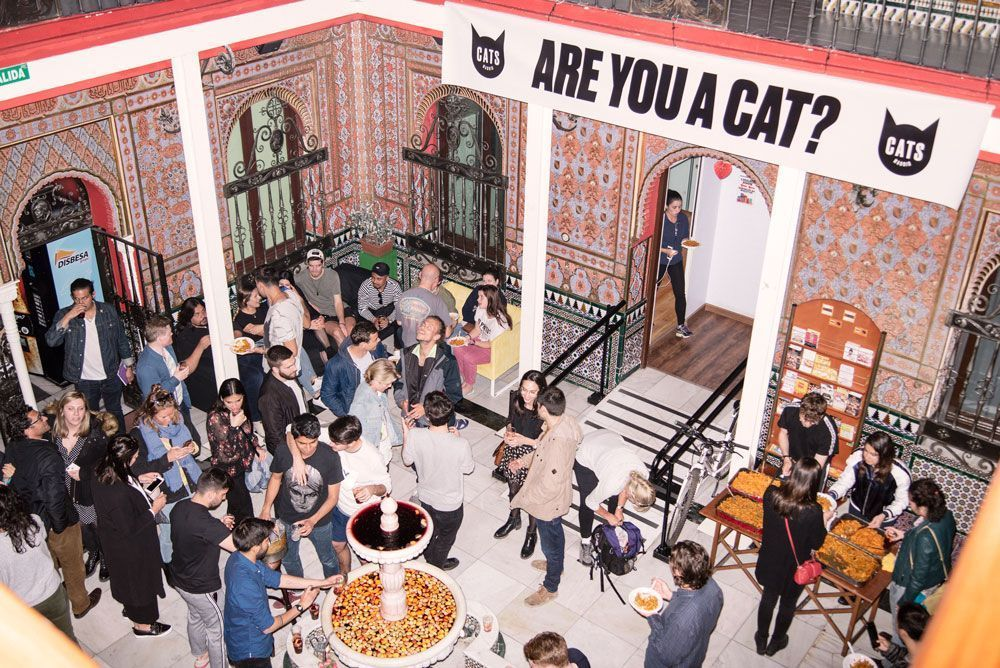 Cats Hostels. Hostel in Madrid interior